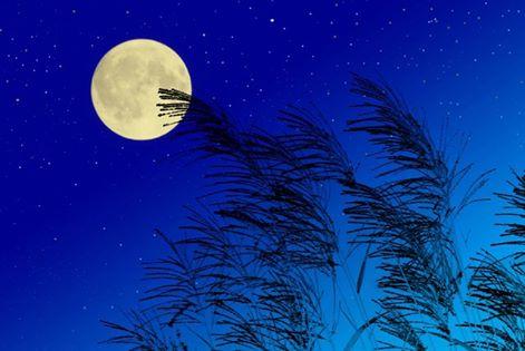 「月から学ぶ、自然の周期によりそう暮らし」のご案内